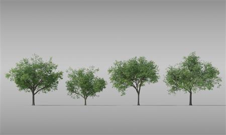 树 Tree