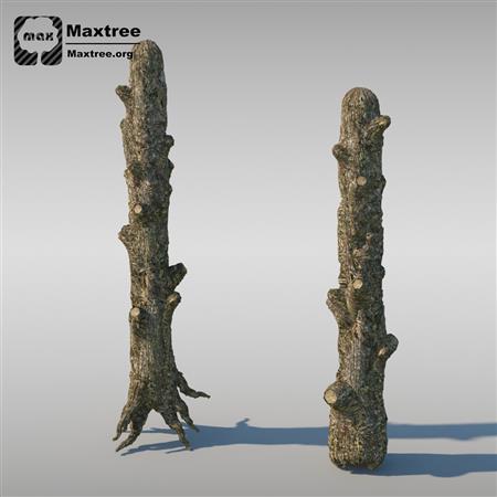 灌木模型 Shrubs