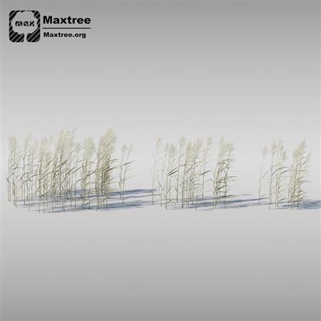 灌木模型 草 树 Shrubs