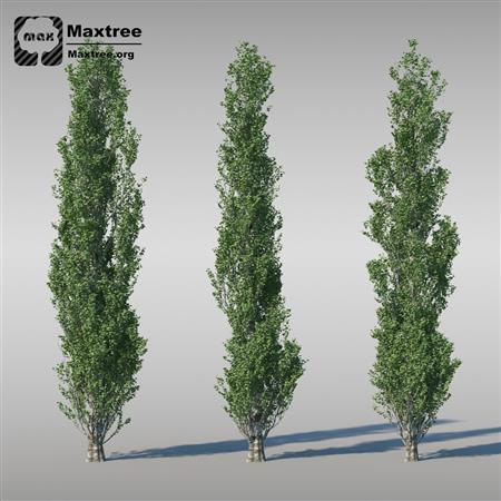 花 灌木模型 草 树 Shrubs