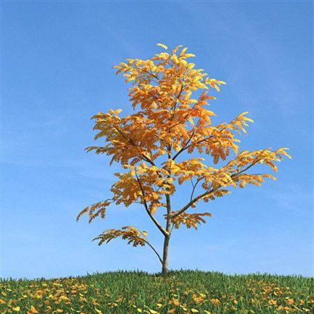 Evermotion Archmode 秋冬树木 秋天的树木