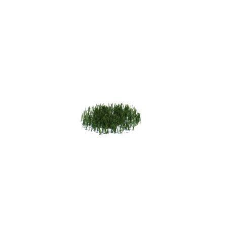 Evermotion Archmode 草地植物 简单的小草