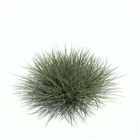 Evermotion Archmode 草地植物 燕麦草