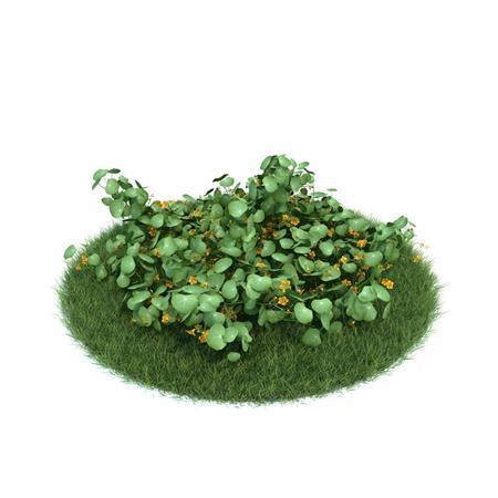 Evermotion Archmode 园艺植物 旱金莲
