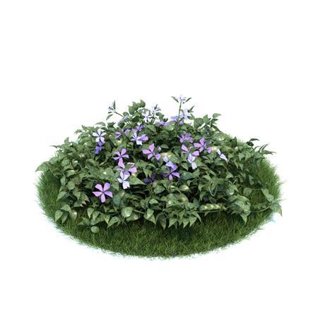 Evermotion Archmode 园艺植物 长春花