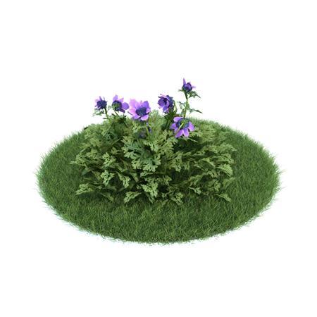 Evermotion Archmode 园艺植物 冠状银莲花