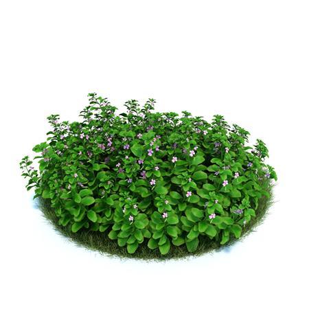 Evermotion Archmode 园艺植物 非洲凤仙