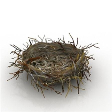 鸟窝 birds nest