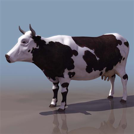 奶牛 cow2