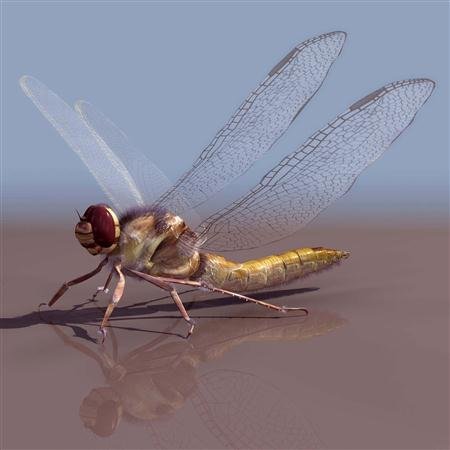 蜻蜓 dragonfly