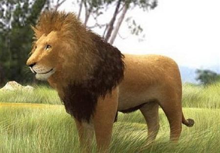 狮子 lion