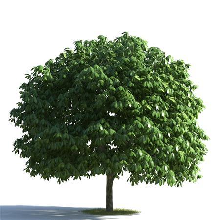 绿色植物合集 各类树木 苍天大树