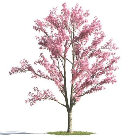 绿色植物合集 各类树木 樱花树