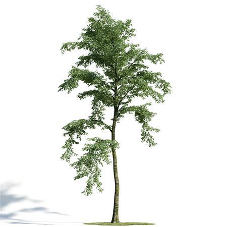 绿色植物套系 树木合集7件套