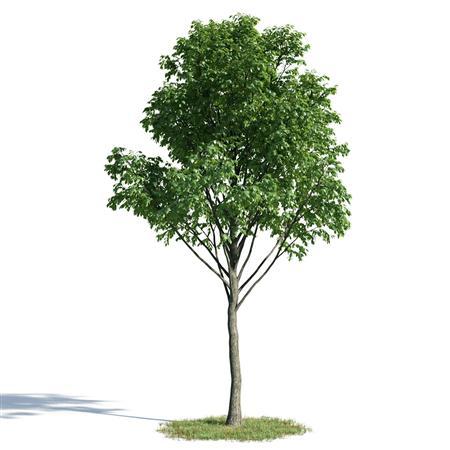 绿色植物套系 花草树木 椴树合集