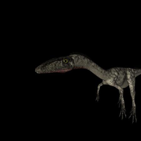 侏罗纪强势来袭 史前恐龙系列 腔骨龙