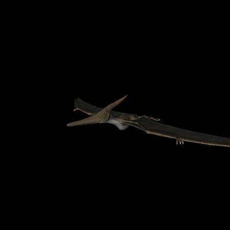 侏罗纪强势来袭 史前恐龙系列 无齿翼龙