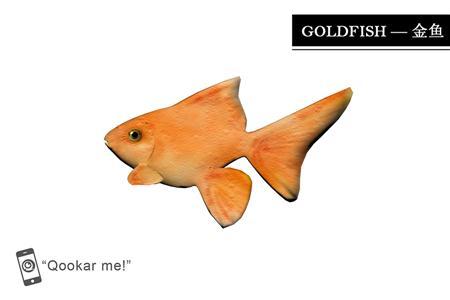 金鱼 goldfish
