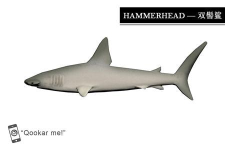 双髻鲨 sphyrnidae