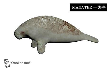 海牛 manatee