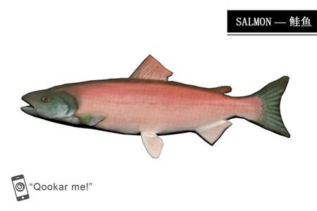 鲑鱼 salmon