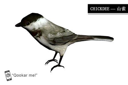 无冠山雀 chickadee