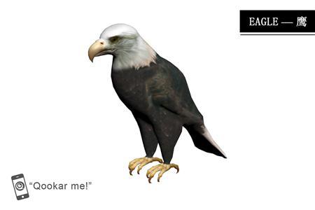 鹰 eagle