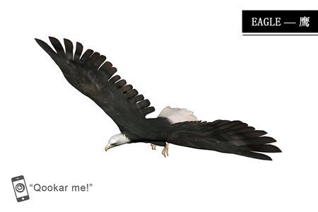 老鹰 eagle