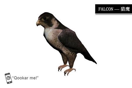 猎鹰 falcon