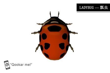 瓢虫 ladybug