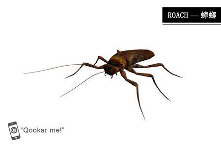 蟑螂 roach