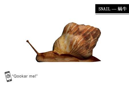 蜗牛 snail