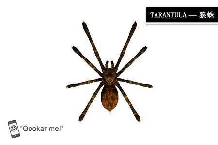 狼蛛 tarantula