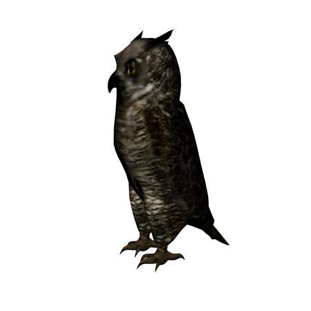 猫头鹰 owl