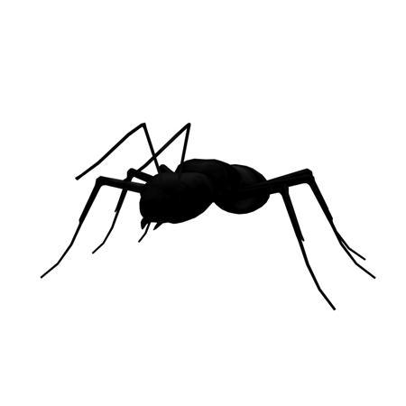 黑蚂蚁 black ant