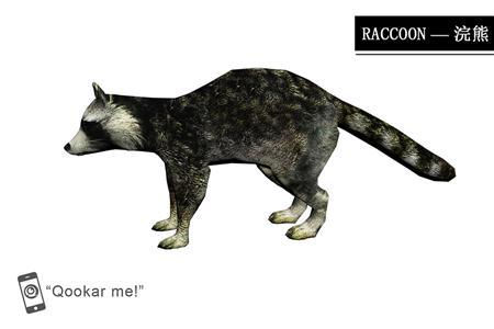 浣熊 raccon