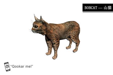 山猫 bobcat