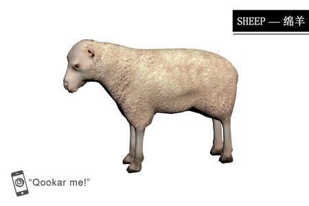 绵羊 sheep