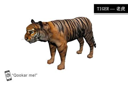 老虎 tiger