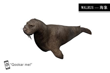 海象 walrus