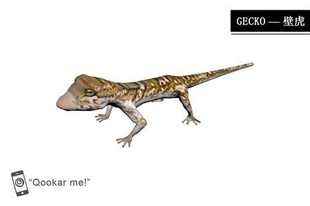 壁虎 gecko