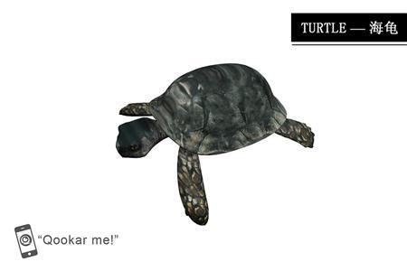 海龟 turtle