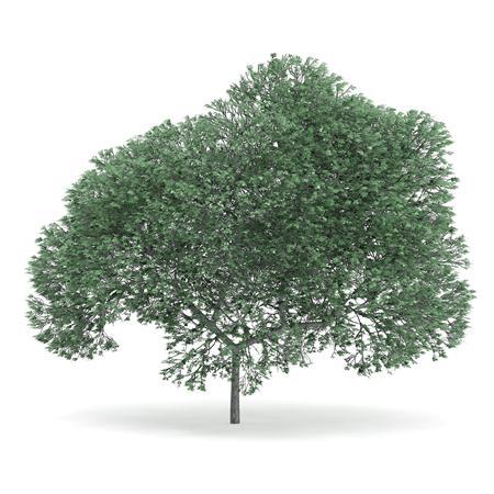 针叶树 7