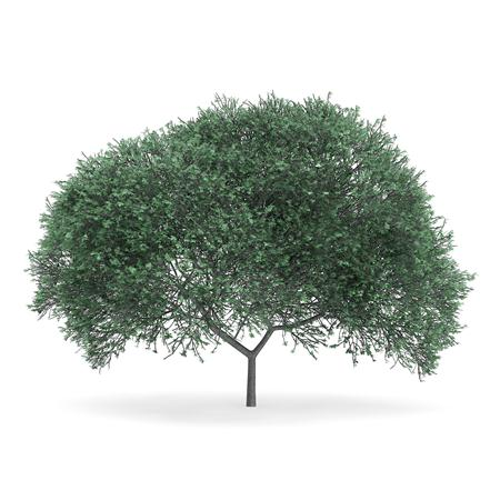 针叶树 8