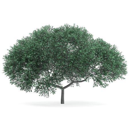 针叶树 9