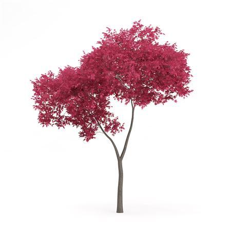 针叶树 14