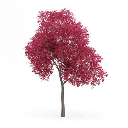 针叶树 16
