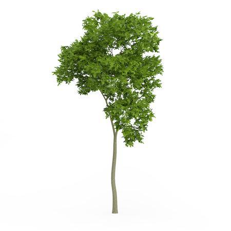 针叶树 20