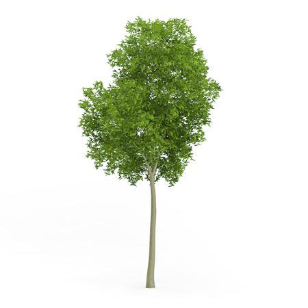针叶树 21