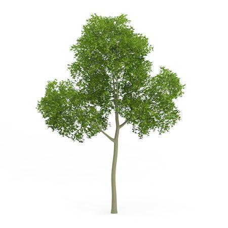 针叶树 22